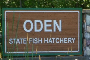 Oden Fish Hatchery Grant Vo 5.transfer